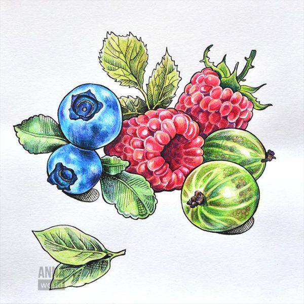 """Иллюстрация карандашами """"Ягоды"""""""
