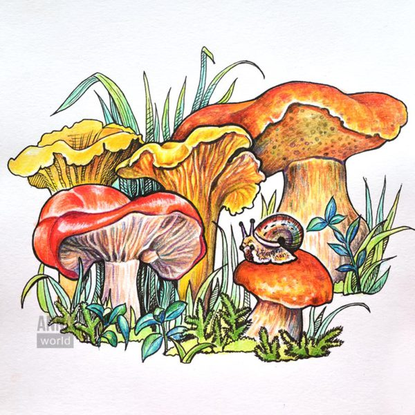 "Иллюстрация карандашами ""Грибы"""