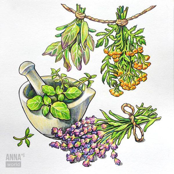 """Иллюстрация карандашами """"Травы"""""""